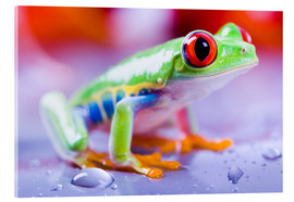 Akrylbillede  colorful frog