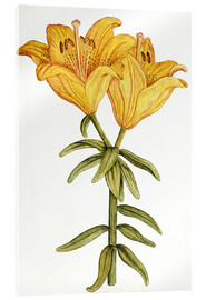 Akrylbillede  Yellow Lily - French School