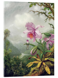 Akrylbillede  Hummingbird Perched on an Orchid Plant - Martin Johnson Heade