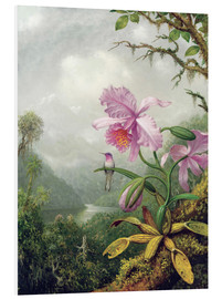 Print på skumplade  Hummingbird Perched on an Orchid Plant - Martin Johnson Heade