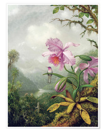 Premium-plakat  Hummingbird Perched on an Orchid Plant - Martin Johnson Heade
