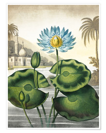 Premium-plakat The blue Egyptian water-lily