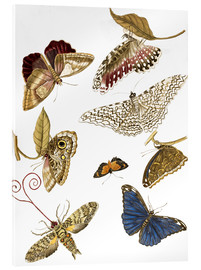 Akrylbillede  Moths and butterfiles - Maria Sibylla Merian