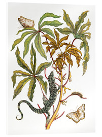 Akrylbillede  cassava with crocodile and butterfly metamorphosis - Maria Sibylla Merian