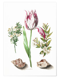 Premium-plakat Tulip with two myrtle branches and two shells