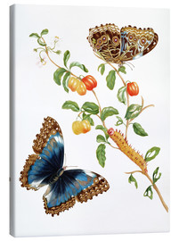 Lærredsbillede  Branch Of West Indian Cherry With Achilles Morpho Butterfly - Maria Sibylla Merian
