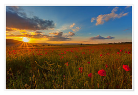 Premium-plakat Sundown Poppies