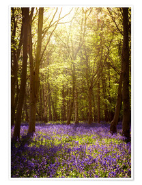 Premium-plakat Sunny forest with bluebells
