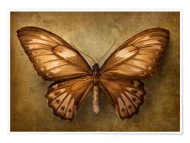 Premium-plakat Brown butterfly