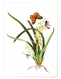 Premium-plakat  Butterflies and a dragonfly on a plant
