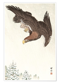 Premium-plakat Flight of an Eagle in Blizzard