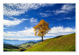 Premium-plakat Isolated tree in autumn, Funes Valley, South Tyrol, Italy