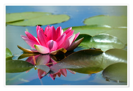 Premium-plakat Water lily with reflection