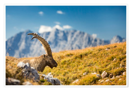 Premium-plakat Alpine Ibex in front of Mount Watzmann
