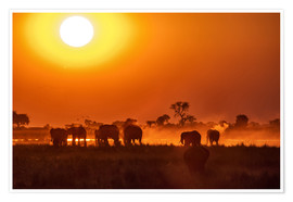 Premium-plakat Elephants at sunset, Chobe Park, Botswana, Africa