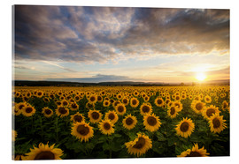 Akrylbillede  Sunflower in the summer - Steffen Gierok