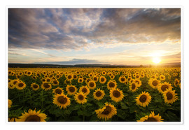 Premium-plakat Sunflower in the summer