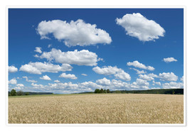 Premium-plakat Summer sky over cereal field