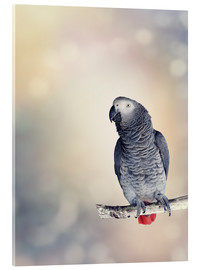 Akrylbillede  African Grey on a branch