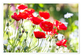 Premium-plakat Red poppies on a sunny day
