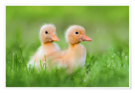 Premium-plakat Two chicks on the road