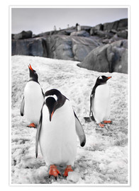Premium-plakat  Three penguins with rocks in the background