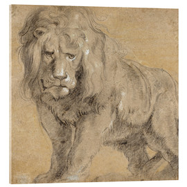 Akrylbillede  Study of a lion - Peter Paul Rubens