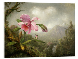 Akrylbillede  Orchid and Hummingbird - Martin Johnson Heade