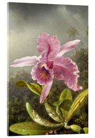 Akrylbillede  Hummingbird and orchid (detail) - Martin Johnson Heade