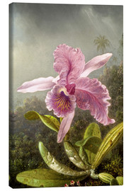 Lærredsbillede  Hummingbird and orchid (detail) - Martin Johnson Heade