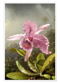Premium-plakat Hummingbird and orchid (detail)