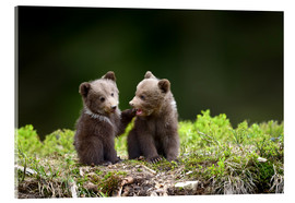 Akrylbillede  Two young brown bears