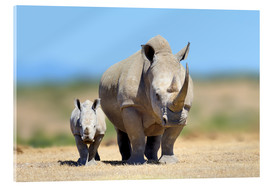 Akrylbillede  White rhinoceros with young in Kenya, Africa