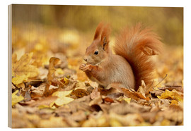 Print på træ  Red Squirrel in an urban park in autumn