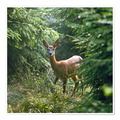 Premium-plakat The deer in the forest