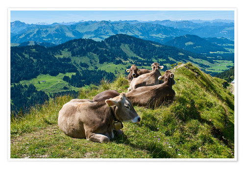 Premium-plakat Cattle near Oberstaufen in the Allgäu
