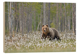 Print på træ  European Brown Bear, Finland - Alfred Trunk