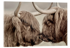 Akrylbillede  Two Scottish highland cattle
