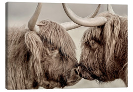Lærredsbillede  Two Scottish highland cattle - imageBROKER