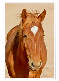 Premium-plakat faithful look of a brown mare