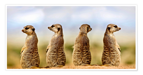 Premium-plakat Four meerkats - four thoughts