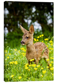 Lærredsbillede  Roe Deer fawn in flower meadow, Normandy - Gérard Lacz