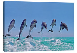 Lærredsbillede  6 dolphins jump out of the water - Gérard Lacz