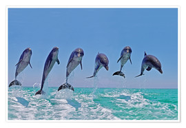 Premium-plakat 6 dolphins jump out of the water