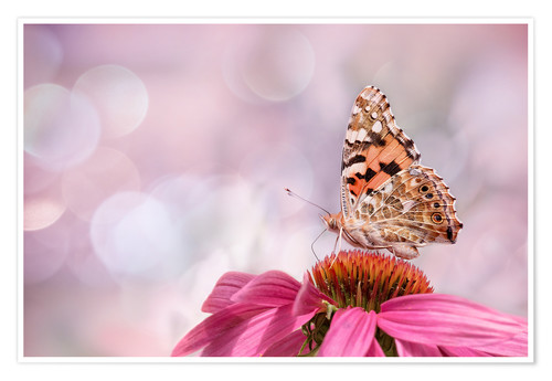 Premium-plakat  Painted Lady