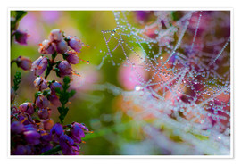Premium-plakat Morning dew on Erica and spider web