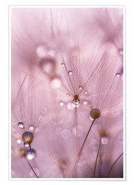 Premium-plakat Dewdrops on a dandelion seed