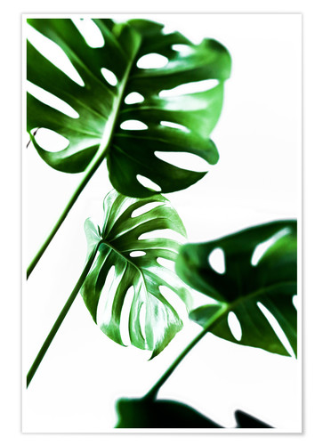 Premium-plakat Monstera 4