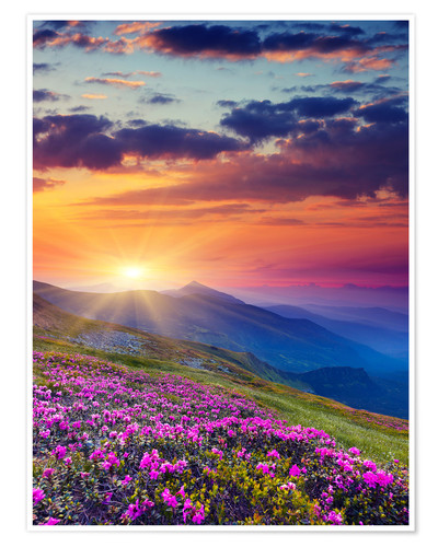 Premium-plakat Rhododendron blossom in the Carpathians