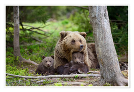 Premium-plakat Brown bear with cubs in forest